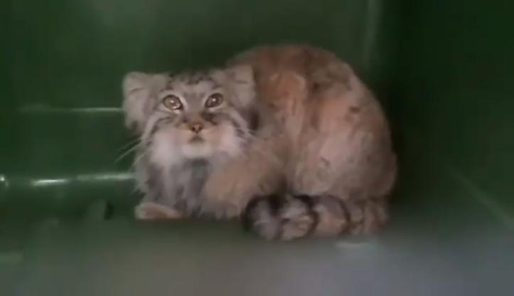 Uciekinier z poznańskiego zoo odnaleziony