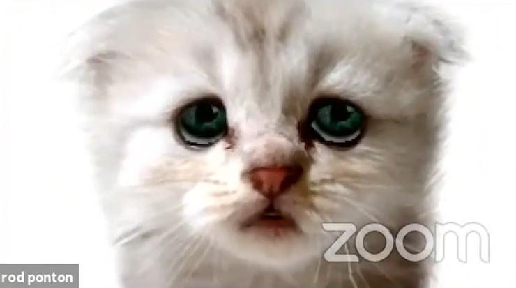 """""""Nie jestem kotem"""". Wpadka podczas rozprawy online [WIDEO]"""