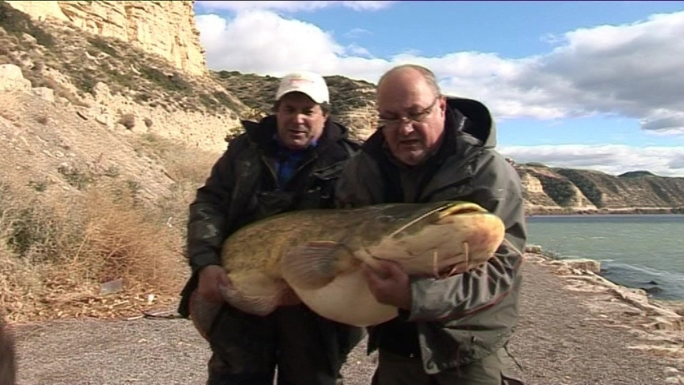 Taaaka ryba - Odcinek 35